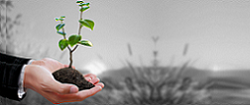 Small-Medium Enterprises (SMEs)